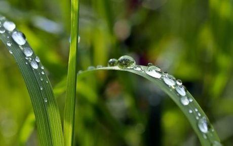 grass-1331703_640